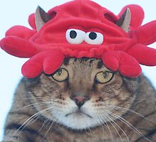 Why is there a crab hat on my head? by cindylu