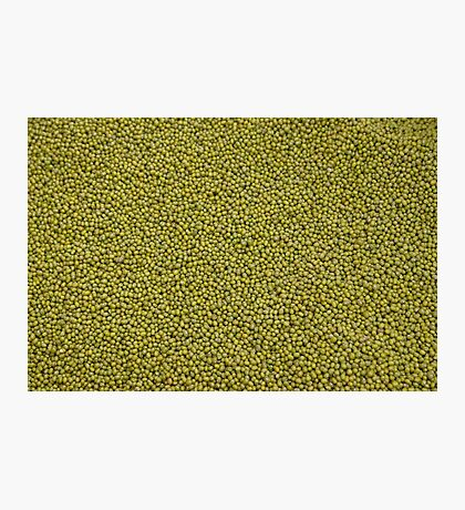 green seeds Photographic Print