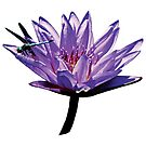 Dragonfly on Purple Water Lily by Susan Savad