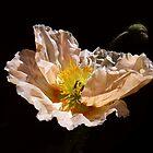 poppy II by Floralynne