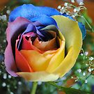 Rose of Many Hues by Sandra Fortier