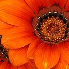 Orange Beauty by BigD