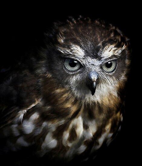 Night Sight by Lance Leopold