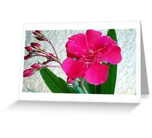 Bright oleander Greeting Card