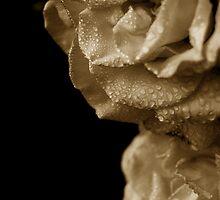 Rain Drops On Roses... by VoodooPlastik