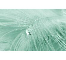 Feather Drop Blue Photographic Print