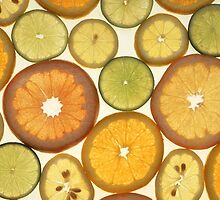 Lemon, Orange and Lime Slices - Yellow Green  by sitnica