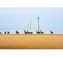 Canadian Geese Rock Harbor Cape Cod Photographic Print