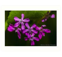 Small Purple Blossoms  Art Print