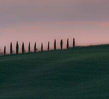 Cypresses in Tuscany by Prussia