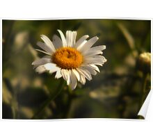 Front Yard Daisy Poster