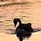 Waterfowl Silhouettes