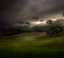 Night Approaches by Paul Cook