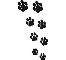 Animal Footsteps Photographic Print