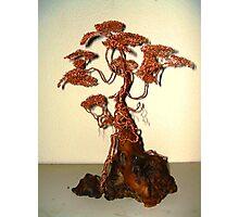 Copper Bonsai Photographic Print