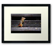 Tiny Visitor... Framed Print
