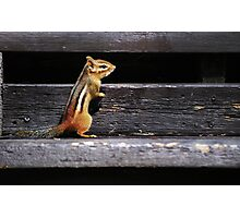 Tiny Visitor... Photographic Print