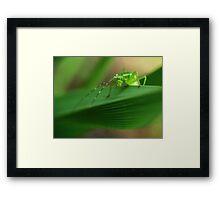 Grasshopper Olympics Framed Print
