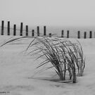 beach grass by Geri Bragg