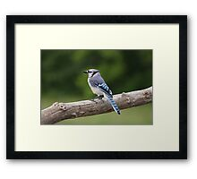 Dedicated to Bonnie Taylor... Framed Print