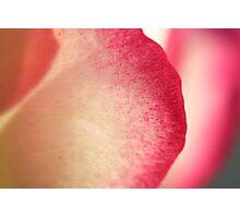Rose Petal Photographic Print