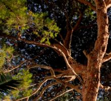 Pollensa Pine Tree Sticker