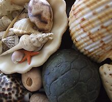 She sells sea shells by the sea shore. by HayleyJS