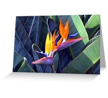 Birds of Paradise Greeting Card