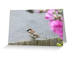 Tweet Tweet Greeting Card