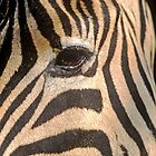 Zebra in Etosha National Park, Namibia. by Wild at Heart Namibia