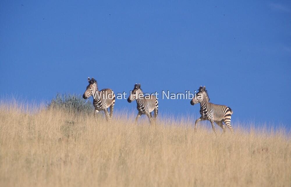 Hartman Mountain Zebras in the Namib Desert by Wild at Heart Namibia