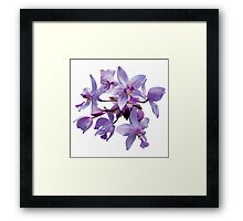Purple Orchids with Dew Framed Print
