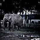An elephant and a bus by BrainCandy