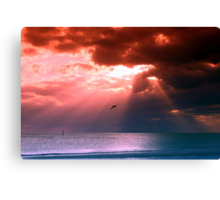 SiestaKey Pelican Canvas Print