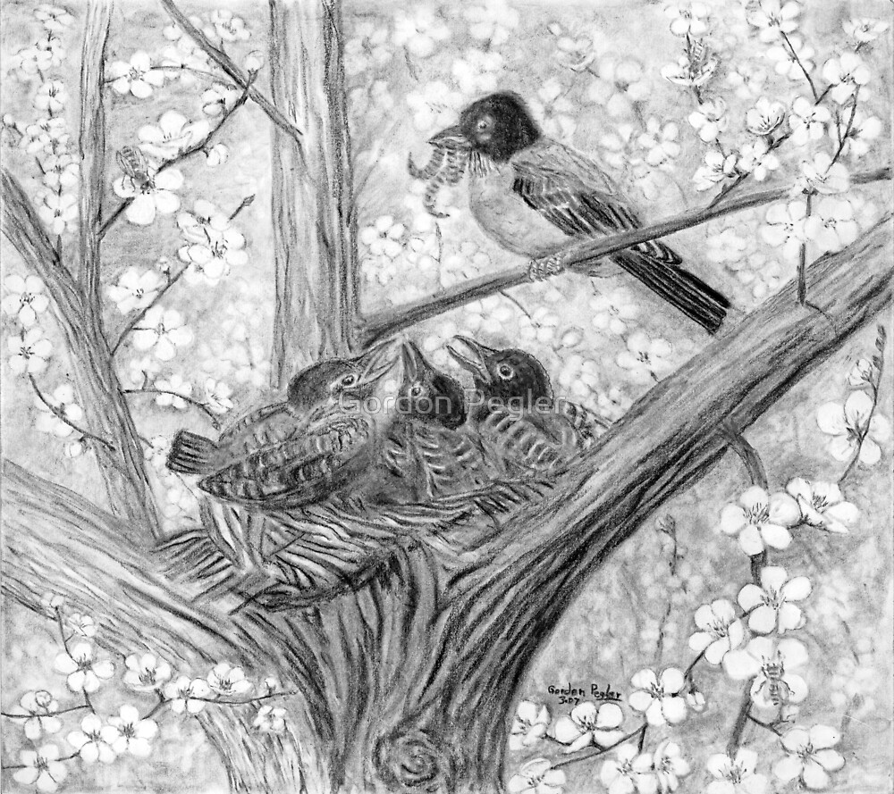 Robin's Nest - Breakfast Time - Charcoal by Gordon Pegler