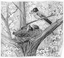 Robin's Nest - Breakfast Time - Charcoal Poster