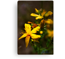 Wild flowers from Lithuania Canvas Print