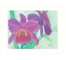 Beautiful Purple Orchid - Oil Pastel  Art Print