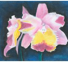 Beautiful Yellow and Pink Orchid - Oil Pastels by Gordon Pegler