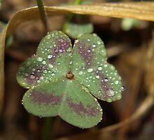 Raindrop Leaves by Linda Mathews