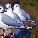 Gulls In Triple............ by lynn carter