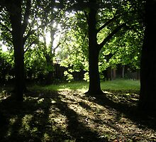 Trees in Shadow by gothgirl