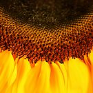 Sunflower by Anne Staub