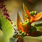 Tropical Delight   - JUSTART © by JUSTART