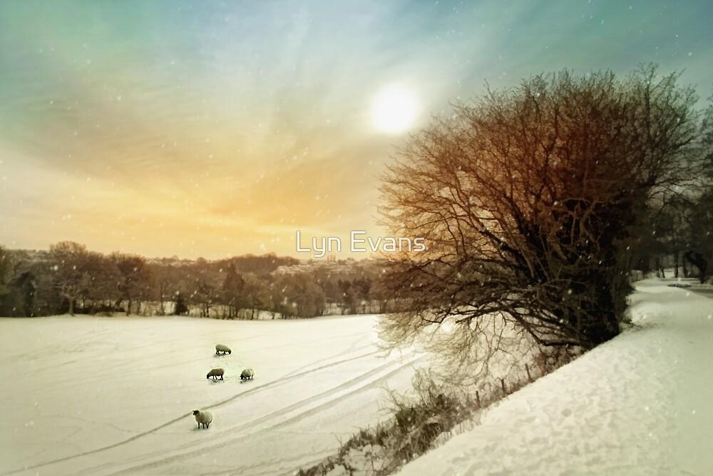 Snow fields by Lyn Evans