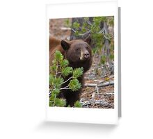 Black Bear with Cinnamon Color Greeting Card