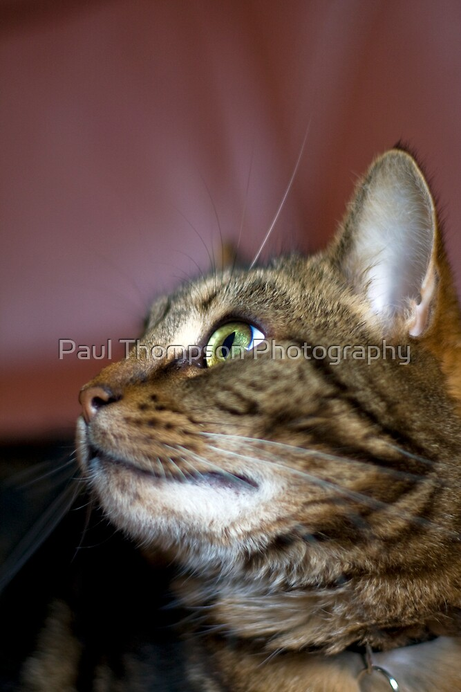 What's new pussycat by Paul Thompson Photography