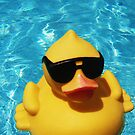 Cool McCool Duck by Diana Forgione