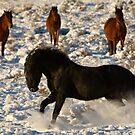 A Show In The Snow by Kent Keller