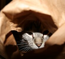 paper bag prey by Brynne Kaufmann
